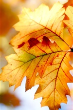 Preview iPhone wallpaper Autumn leaves, bokeh, colors