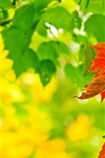Preview iPhone wallpaper Autumn, leaves, green, red, sunlight, bokeh