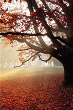 Preview iPhone wallpaper Autumn, park, lonely tree, red leaves, sun