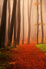 Preview iPhone wallpaper Autumn, trees, fog, forest, trail