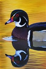 Preview iPhone wallpaper Bird, duck, swims
