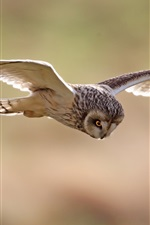 Preview iPhone wallpaper Birds, owl, flight