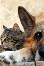 Preview iPhone wallpaper Cat with dog, friendship