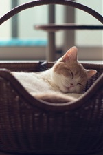 Preview iPhone wallpaper Cute cat sleep in the basket