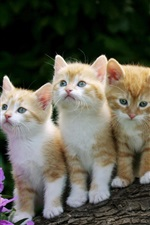 Preview iPhone wallpaper Cute kittens, furry, flowers