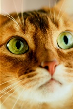 Preview iPhone wallpaper Cute orange cat, face, green eyes