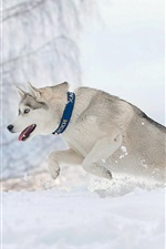 Preview iPhone wallpaper Dog running in winter