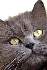 Preview iPhone wallpaper Furry gray cat, yellow eyes