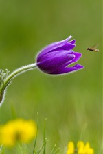 Preview iPhone wallpaper Grass, purple flower, insect