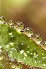 Preview iPhone wallpaper Green leaves, water drops, macro