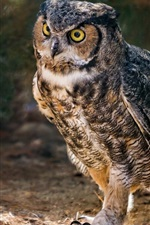 Preview iPhone wallpaper Horned owl, birds