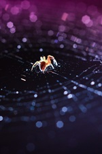 Preview iPhone wallpaper Insect, spider, web, bokeh, macro