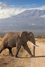 Preview iPhone wallpaper Kenya, mountains, volcanoes, road, elephant