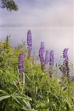 미리보기 iPhone 배경 화면 호수, 안개, 꽃, 아침