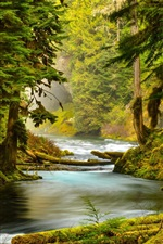 Preview iPhone wallpaper McKenzie River, Oregon, forest, trees, moss