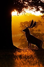 Preview iPhone wallpaper Morning, nature, forest, trees, deer