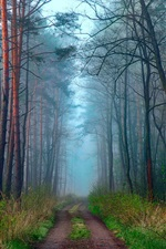 Preview iPhone wallpaper Morning nature, spring, forest, road, haze
