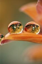 iPhone壁紙のプレビュー オレンジの花のマクロ、花びら、水滴