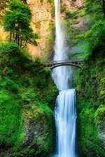 Preview iPhone wallpaper Oregon, USA, waterfall, stream, forest, trees, bridge, rock