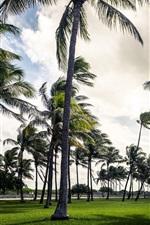 Palm trees, beach, Miami, Florida, USA