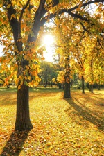 Preview iPhone wallpaper Park, trees, grass, leaves, autumn, sunset
