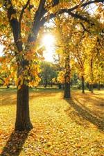 미리보기 iPhone 배경 화면 공원, 나무, 잔디, 잎, 가을, 일몰