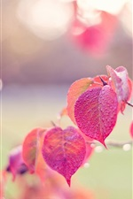 Preview iPhone wallpaper Pink leaves, autumn, drops, dew, glare