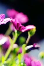 Preview iPhone wallpaper Purple flowers, blur, sun