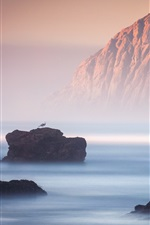 Preview iPhone wallpaper Rocks, sea, fog, bird, nature landscape