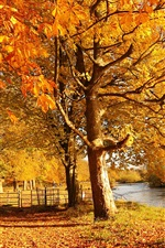 Preview iPhone wallpaper Scotland, Motherwell, nature forest autumn, trees, yellow leaves, river