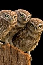 Preview iPhone wallpaper Three owl, tree stump