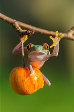 Preview iPhone wallpaper Tree frog, apple, twig