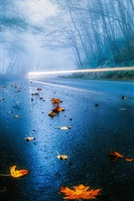 Preview iPhone wallpaper USA road, autumn, rain, fog, foliage, forest, trees, light