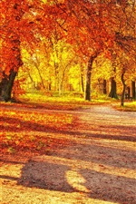 Preview iPhone wallpaper Autumn park, red leaves, wood bench, sunlight