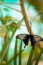 Preview iPhone wallpaper Black butterfly, branch, grass, leaves