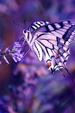 Preview iPhone wallpaper Butterfly, flowers, insect, plant, purple background