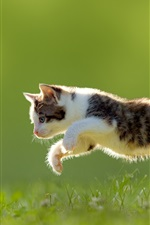Preview iPhone wallpaper Cat, butterfly, jumping, grass