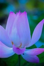 Preview iPhone wallpaper Flower, lotus, petals, dawn