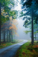 Preview iPhone wallpaper Forest, pine, spruce, road, fog, trees, autumn, nature