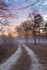 Forest, road, dusk