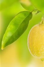 Fruit, yellow lemon, leaves, bokeh