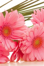 Preview iPhone wallpaper Gerbera pink flowers