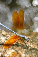 Preview iPhone wallpaper Insect, dragonfly, wings, orange, glare, stones