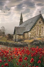 Preview iPhone wallpaper Ireland, poppies, church, road, birds, clouds
