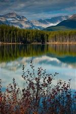 Lago, lagoa, água, montanhas, floresta, árvores