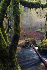Preview iPhone wallpaper Moss, trees, stones, stream, Oregon