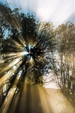 Preview iPhone wallpaper Nature, spring, tree, sun rays