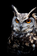 Preview iPhone wallpaper Owl, black background