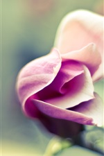 Preview iPhone wallpaper Pink flower, rose, blossom, blur background