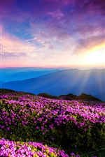 Preview iPhone wallpaper Purple flowers, sky, clouds, sunset, rays, mountains